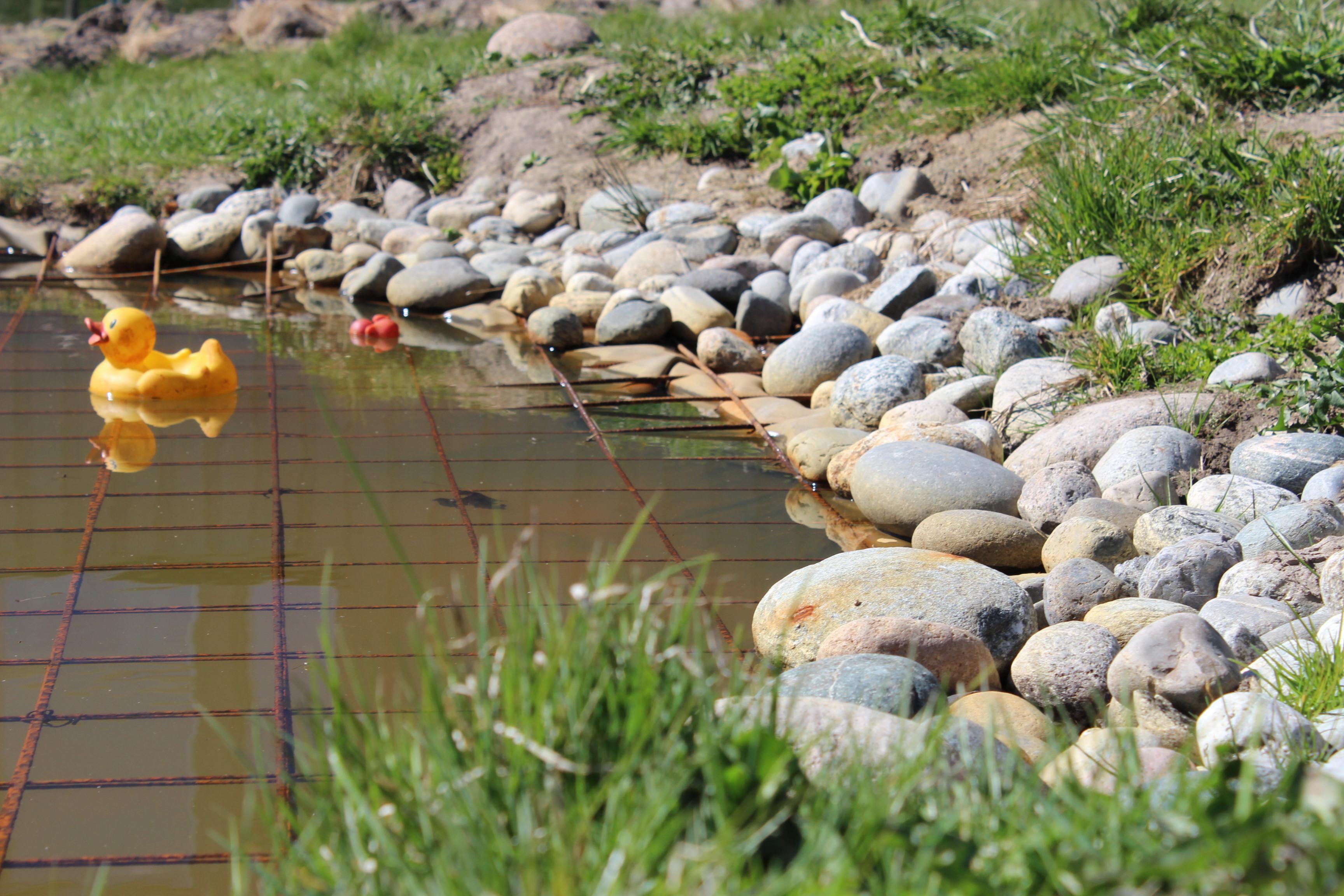 And i dammen vår