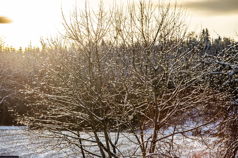 Vinterstemning fra julemarkedet på Steinerskolen i Indre Østfold
